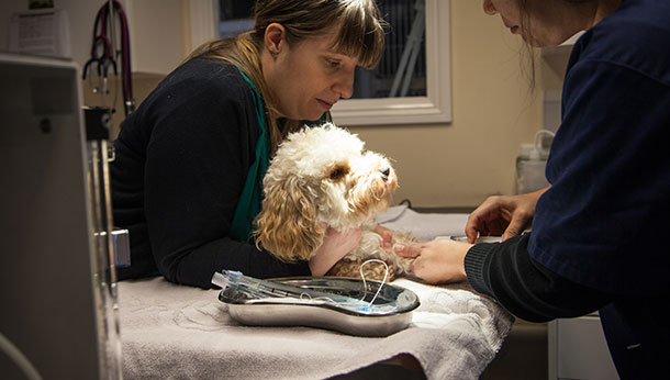 Dog-check-up