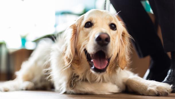 Senior pet health check