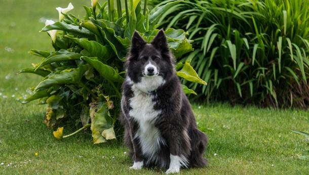 Beauty the Dog
