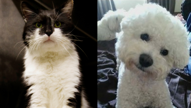 Beethoven the cat and Charlie the dog