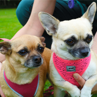 Roxy & Chicca -