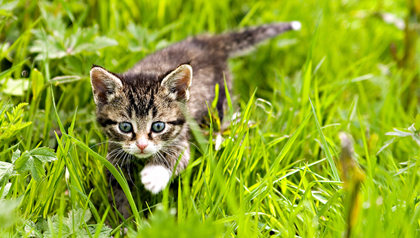 Cats Protection Neutering