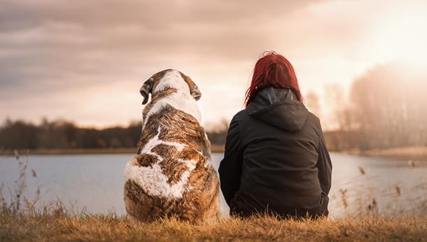Dogs Trust Neutering
