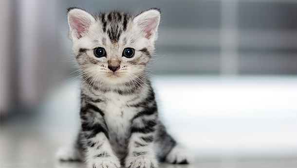 Healthy Start for your kitten for £55