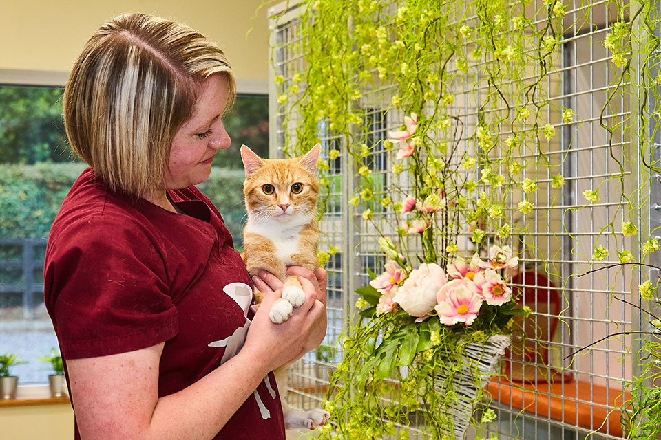 Cattery Ginger Cat