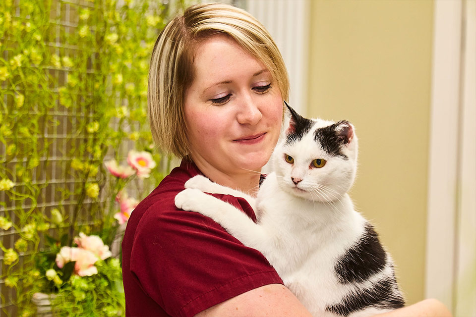 Staff holding black and white cat