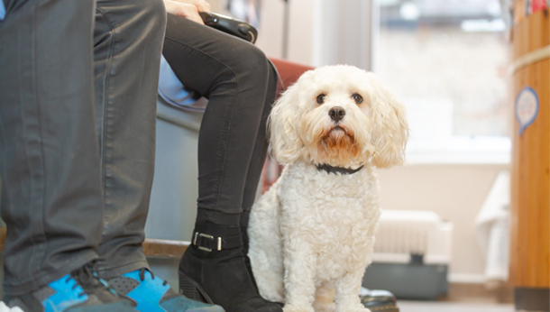 Small dog in waiting area