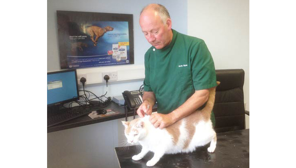 cat injection