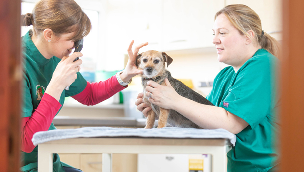 Puppy ear check up with nurse