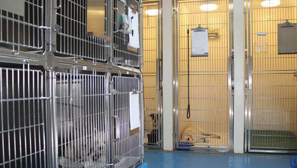 Separate Dog Ward