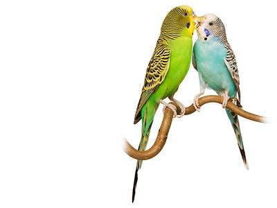 birds together