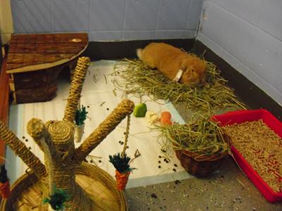 rabbit ward