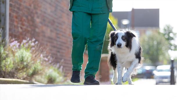 Collie Walk