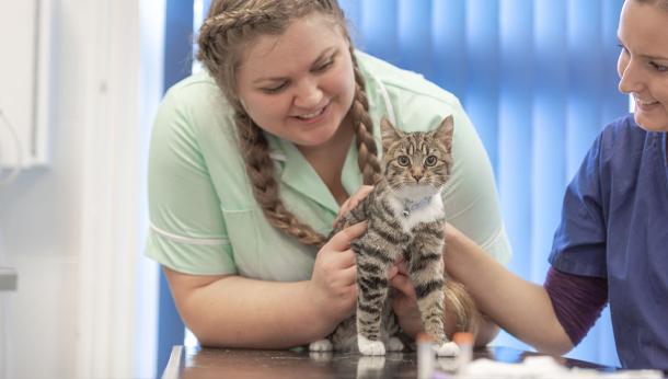 Tabby Kitten in Clinic