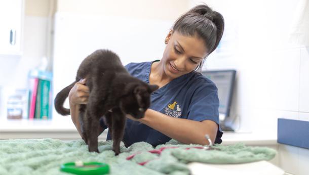 Vet with Black Cat
