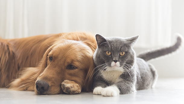 Cat and dog lying down together