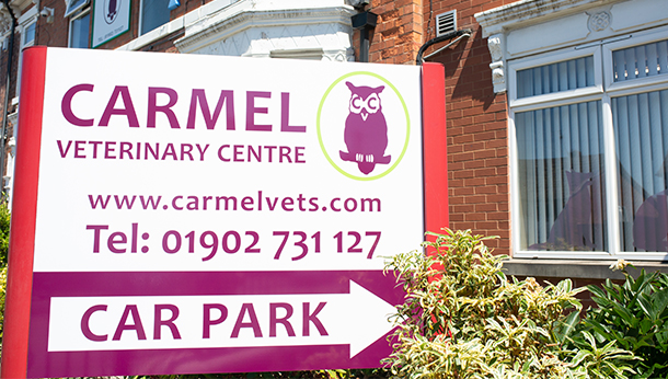 Carmel_Vets_Photo12