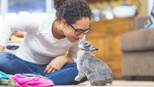 photo of special offer with cute rabbit