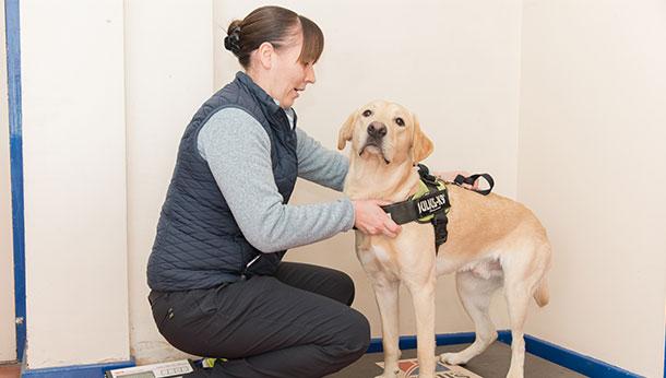 Dog with nurse