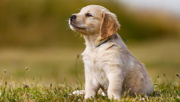Puppy offer
