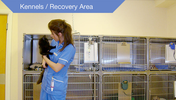 Kennels and Recovery Area