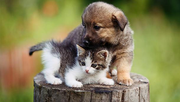 puppy and kitten on tree stump