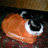 Loki in a Bag