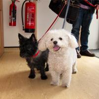 Nifty & Bella -