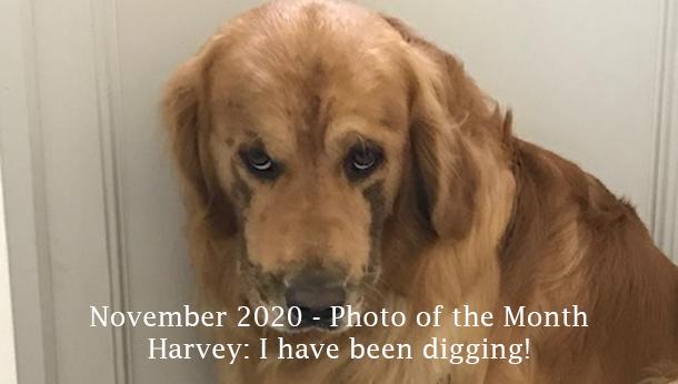November 2020 Harvey