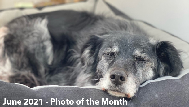 June 2021 Photo of the Month