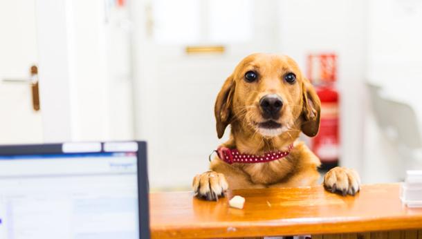 Dog at reception