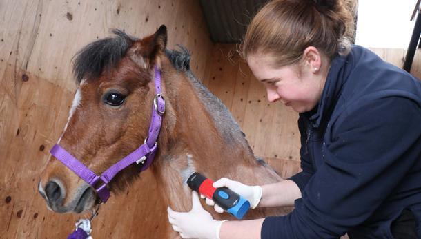 Vet and foal