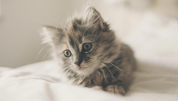 Kitten Package