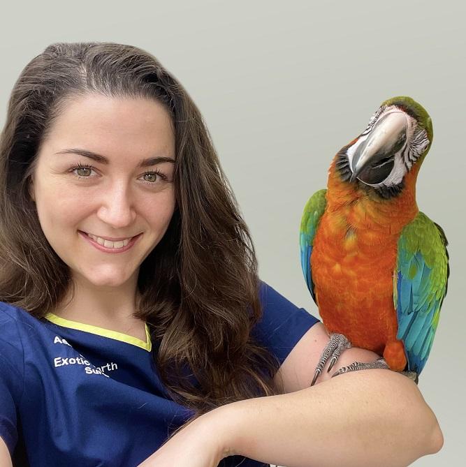 Dr Ashton Hollwarth - BSc BVMS CertAVP (Zoo Med) MRCVS