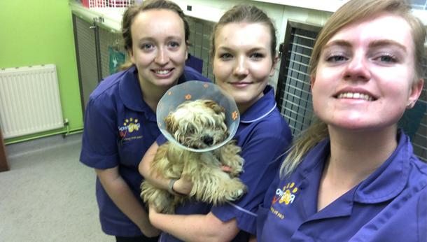 Three nurses with puppy