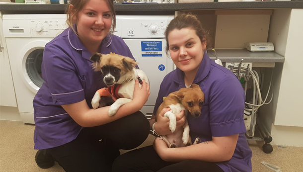 Two nurses with dogs