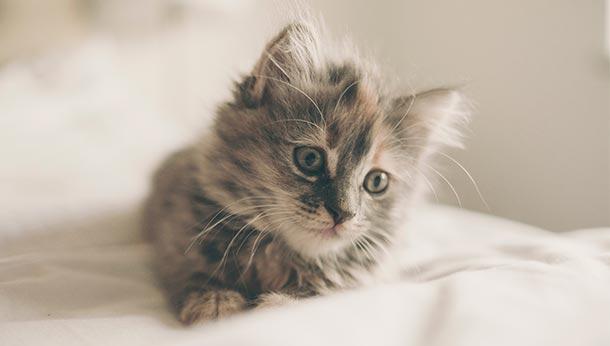 KittenPack