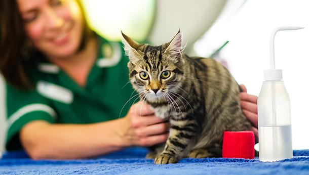 Kitten Starter Scheme