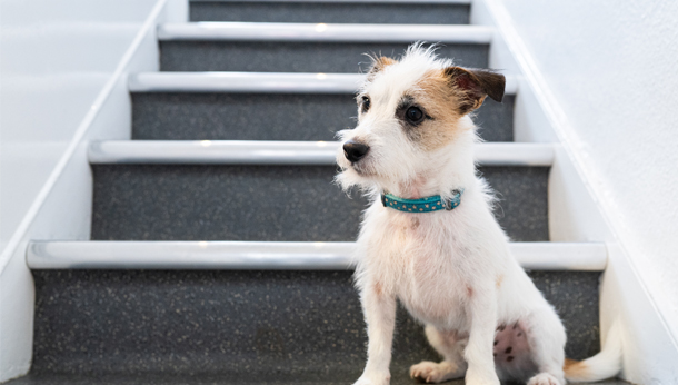 Puppy on staircase