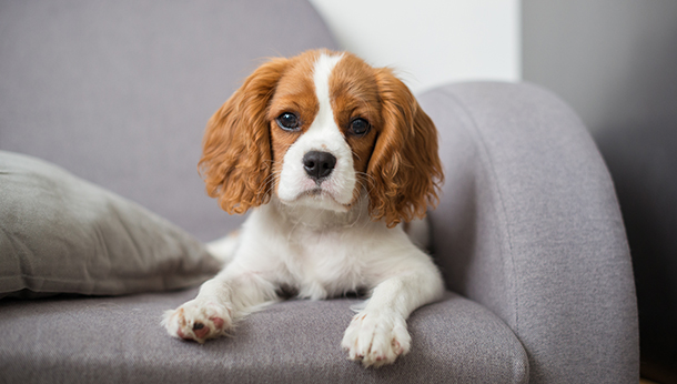 dog on settee