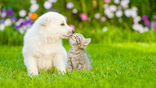 cat and dog touching faces on green grass