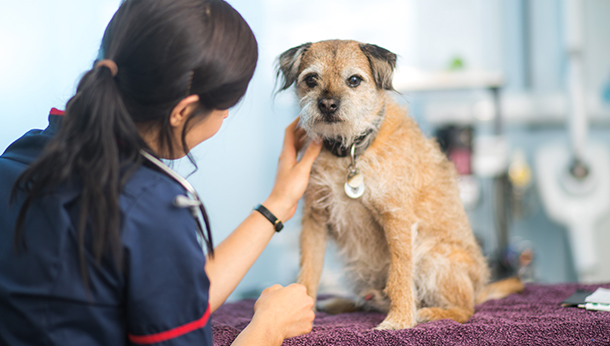 Rescue Pet Clinic