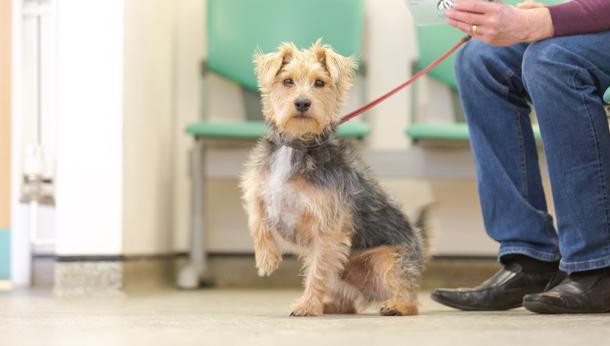 Healthy Pet Scheme