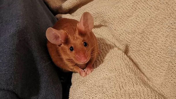 Mouse on a blanket