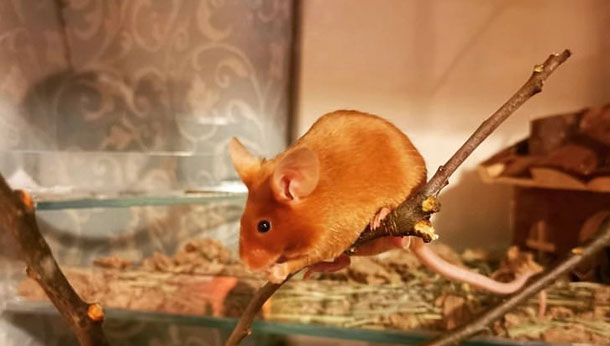 Mouse on a branch