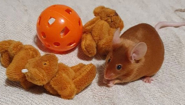 Mouse with toys