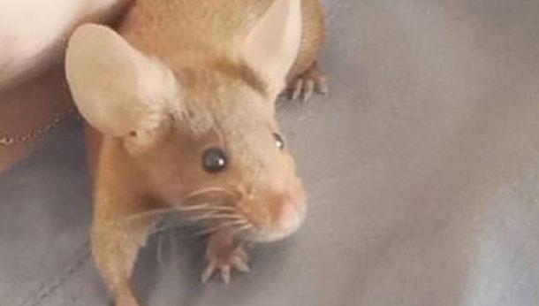Shoulder mouse