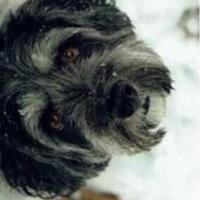 Alfie -