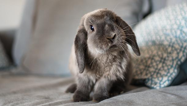 bunny-offer