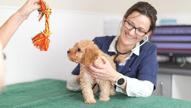 Puppy-consult